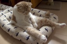 疲れた様子の猫