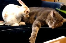 猫に寄り添って眠るうさぎ