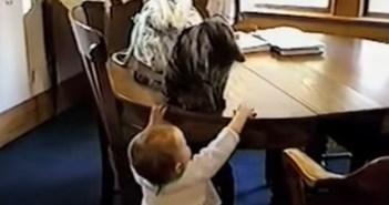 赤ちゃんと遊ぶ猫