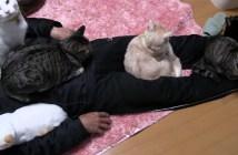 猫に好かれる男性
