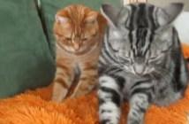 マットをフミフミする猫
