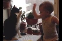 猫と赤ちゃんの猫パンチ対決