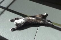 畳の上でのんびりする猫