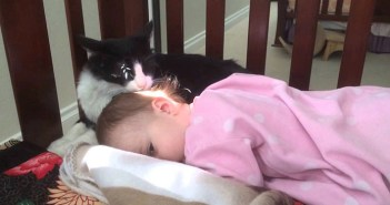 赤ちゃんの頭をペロペロする猫