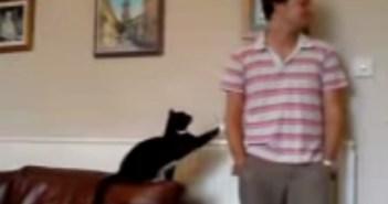 知らんぷりするご主人さまを振り向かせようとする猫