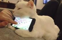 猫のスマホスタンド