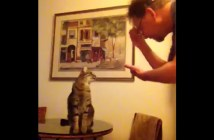 手話を理解する猫