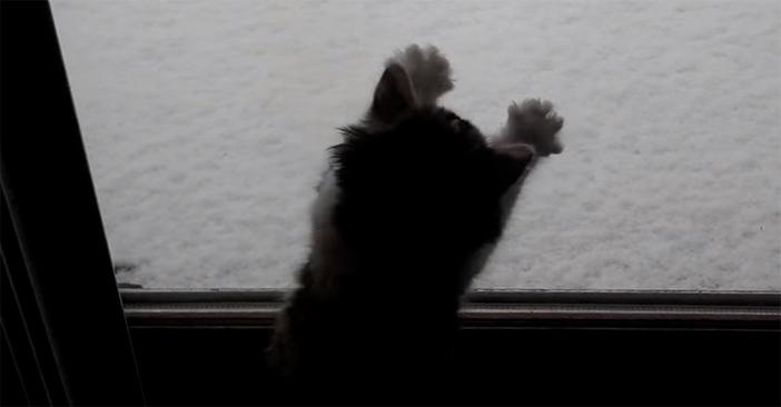 可愛い動きの子猫