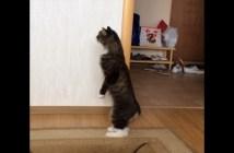 初めて見る赤ちゃんに興味津々の猫