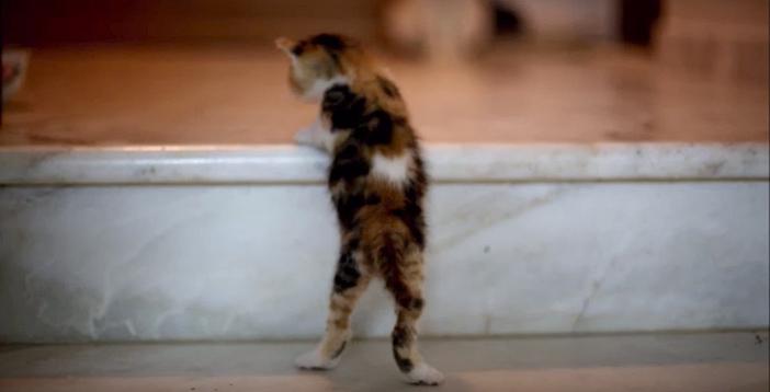 階段を上れない子猫