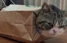 紙袋を着る猫