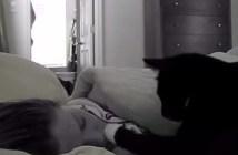 飼い主さんを起こしにくる猫