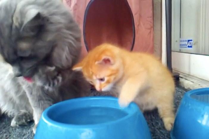 手につける子猫