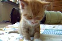 baby_cat