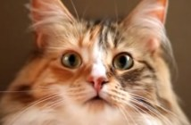 雨の音に驚く猫