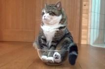 ボウルに入って落ち着く猫