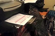 プリンター猫