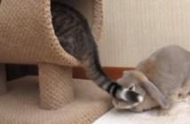猫にしっぽ攻撃されるウサギ