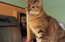 猫パンチのチャンスをうかがう猫