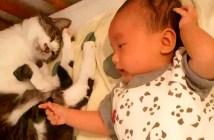しっぽであかちゃんをあやす猫