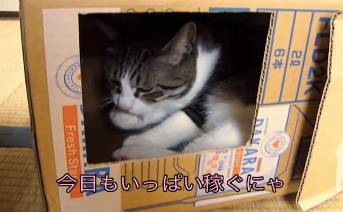 貯金箱の中にスタンバイする猫