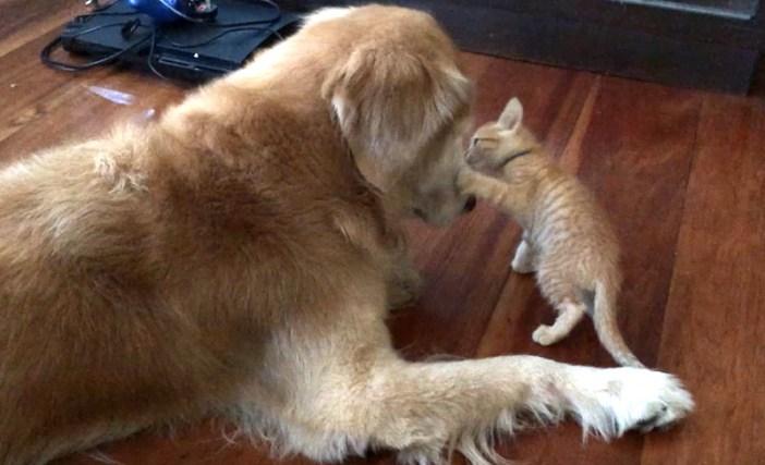 猫と犬の出会い