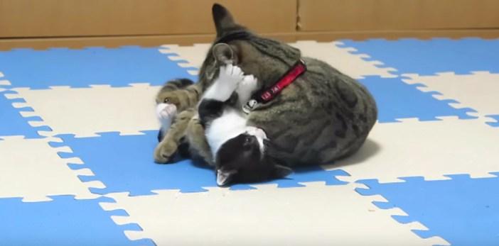 子猫もおばあちゃんにタジタジ