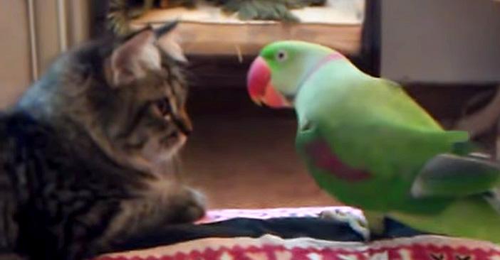 子猫に近づくオウム