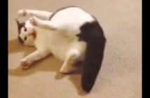 自分のシッポと格闘する猫