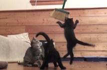 掃除を邪魔する子猫