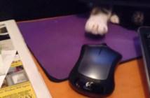 マウスを譲り合う猫