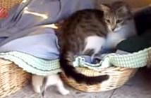 子猫を見失って焦る母猫