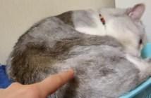 猫を指で突っつくと