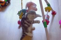 赤ちゃん用のオモチャで遊ぶ子猫