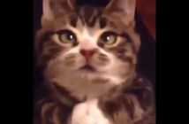onedari_cat