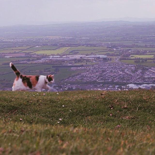 山を歩く猫