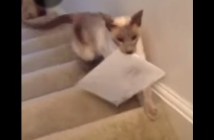 手紙を届けてくれる猫