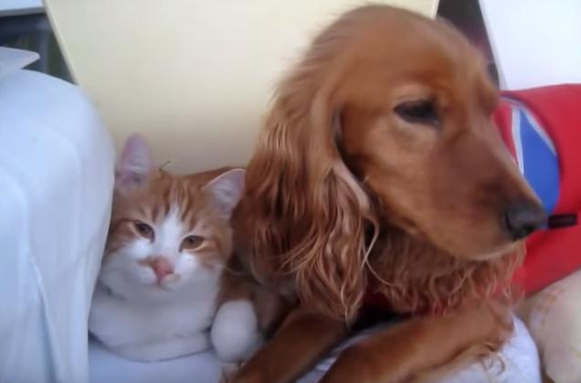犬といっしょにいられて幸せそうな猫