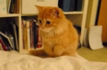 布団にダイブする子猫