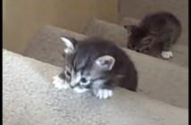 生まれて初めて階段登りをする子猫