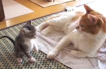 子猫の1ヶ月の成長の記録