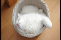 寝るポジションが決まらない猫