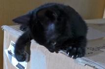 シールを貼り直す子猫
