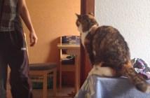 ハイタッチを決める猫
