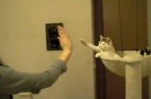 やさしくハイタッチする猫