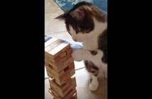 ジェンガをする猫