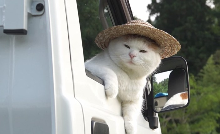 軽トラから見つめる猫