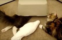 仲良しなオウムと猫