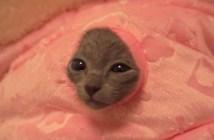 焼き魚をおねだりする猫