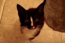 キャッキャッキャッとおしゃべりする子猫